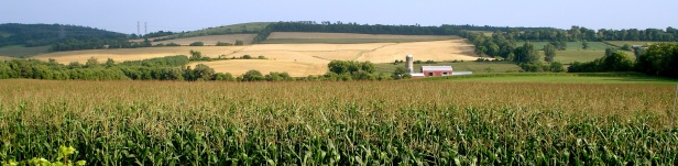 Northumberland Farm 1